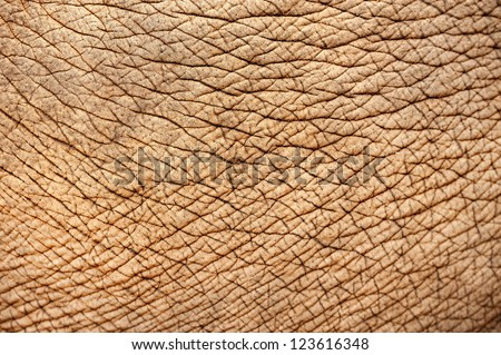close up of elephant skin - stock photo