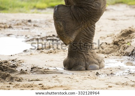 Close up of elephants foot