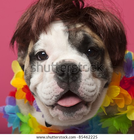Close-up of English Bulldog puppy wearing a wig and colorful lei, 11 weeks old, in front of pink background - stock photo