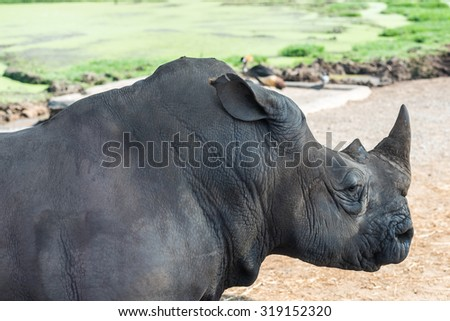 close-up of face and torso standing rhino side and slightly behind - stock photo