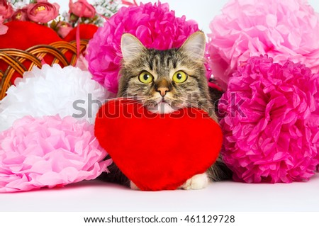 Close up of face of a cat and a toy red heart