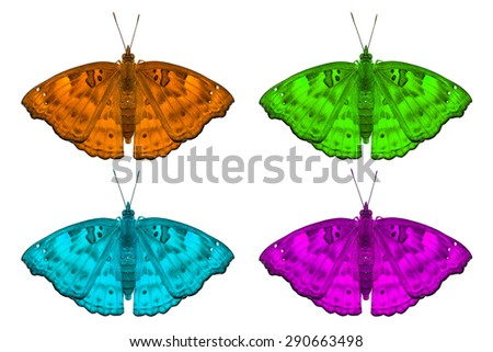 Close up of fancy color female Black Prince (Rohana tonkiniana siamensis) butterflies, isolated on white background with clipping path - stock photo
