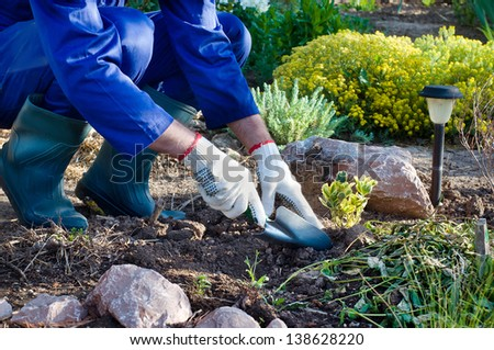 Close-up of farmer's hands planting a bush in soil using shovel - stock photo
