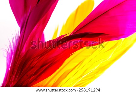 Close-up of feather  on background. - stock photo