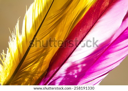 Close-up of feather with light on background.Silhouette style. - stock photo