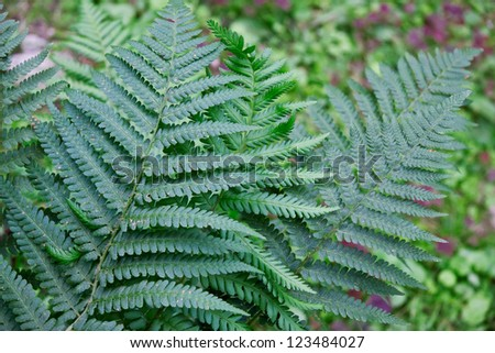 Close up of fern leaf