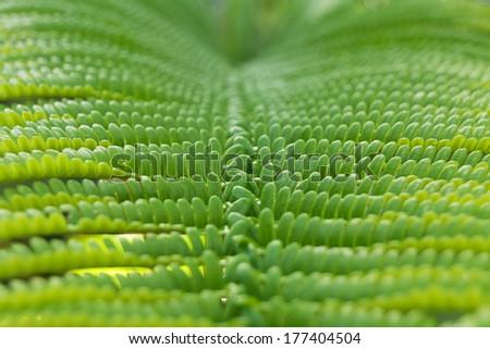 Close-up of fern leaf in Big island forest, Hawaii - stock photo