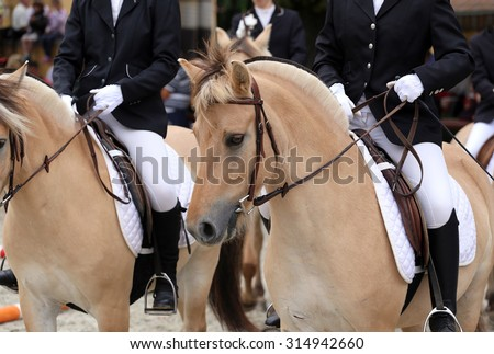 Close up of fjord horses on a dressage event - stock photo