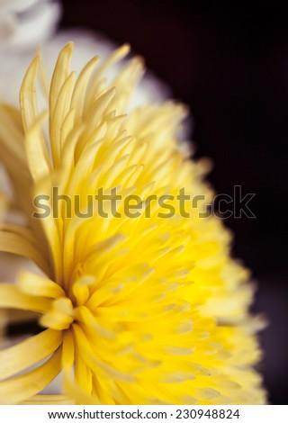 Close up of flower, shallow DOF artistic toned photo with space for text - stock photo
