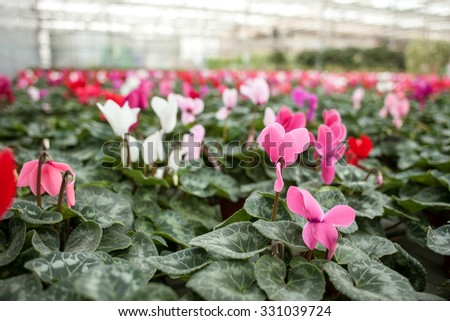 Close up of flowers growing up at greenhouse - stock photo