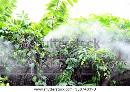 Close up of foggy forest.  - stock photo