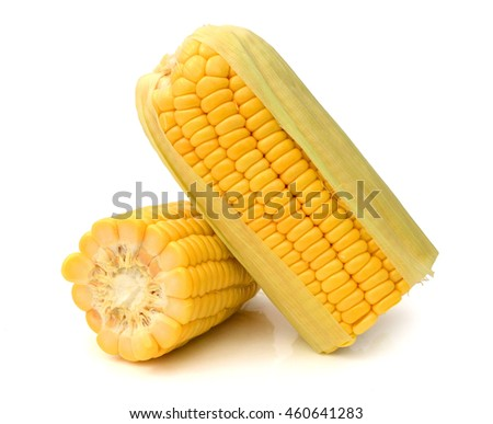 Close up of fresh corn ear. Isolated on a white background.