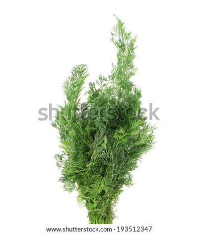 Close up of fresh dill. Isolated on a white background.