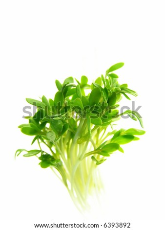 Close-up of fresh green delicate cress petals against white background