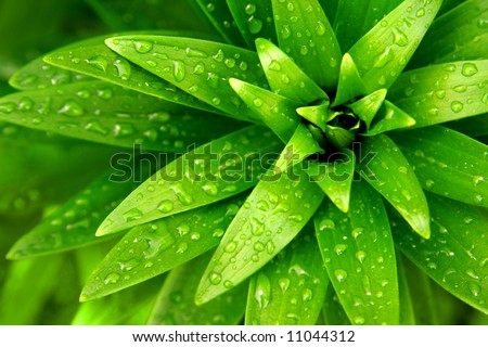 Close-up of fresh green foliage with water drops after rain - stock photo