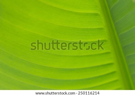Close-up of fresh green leaf as background.  - stock photo