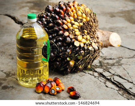 Close up of fresh Palm Oil seeds and cooking oil, selective focus.  - stock photo
