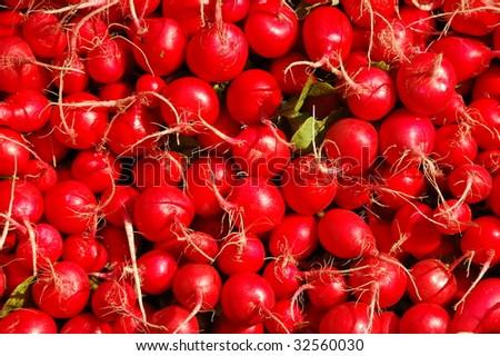 Close up of fresh radishes - stock photo