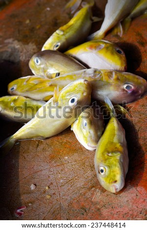 Close up of fresh raw fish on open market, selective focus. - stock photo