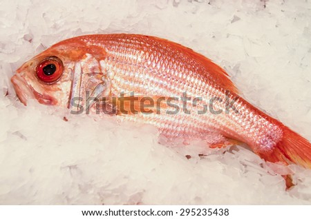 Close-up of fresh red snapper on a bed of ice at the famous Pike Place Market in Seattle. - stock photo