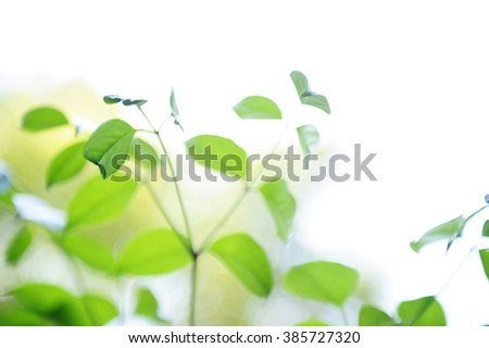Close-up of fresh tree leaves. - stock photo