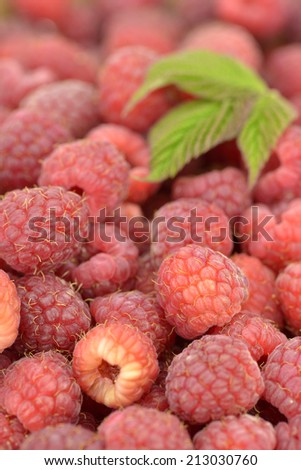 Close-up of freshly picked raspberries with leaves - stock photo