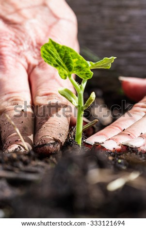 close up of freshly planted green plant with dirty hands compacting the soil around it - stock photo