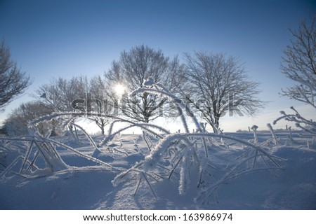Close up of frozen foliage, after heavy snow fall - stock photo