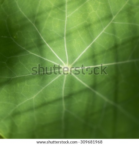 Close-up of full frame shot of the veins of a green leaf, Lake Of The Woods, Ontario, Canada - stock photo