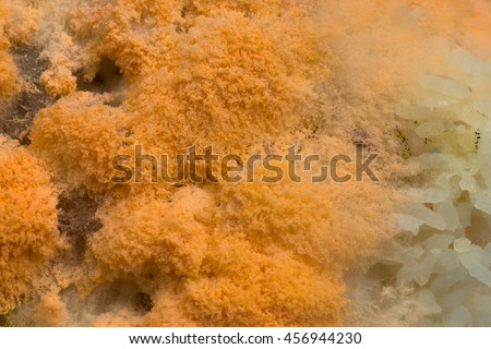 Close up of fungus on rice. - stock photo