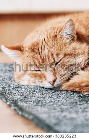 Close up of funny lovely Red Cat Curled Up and Sleeping in His Bed