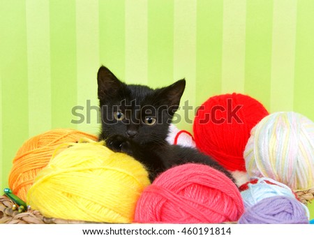 Close up of Fuzzy black kitten enjoying a comfortable spot in a crochet basket full of yarn balls. Green striped background. Copy Space - stock photo