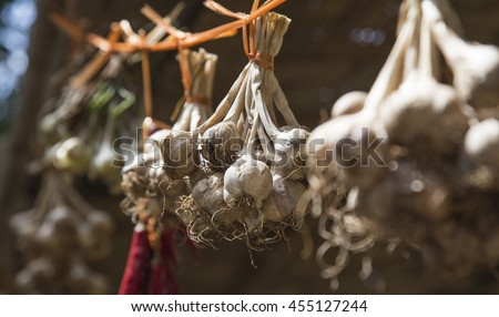 Close up of garlic hanging in the sunlight - stock photo
