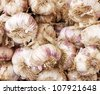 close up of garlic on the market - stock photo