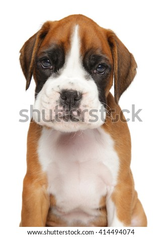 Close-up of German Boxer puppy isolated on white background - stock photo