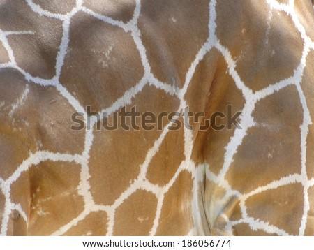 Close Up of Giraffe Pattern - stock photo
