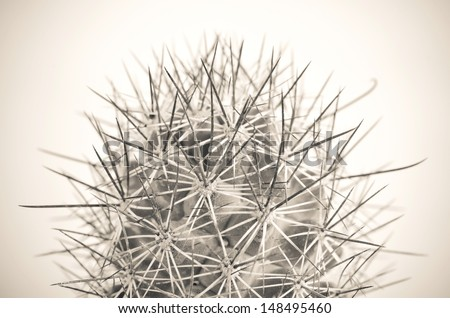 Close up of globe shaped cactus with long thorns. Shallow depth of field.Processed with vintage style. - stock photo