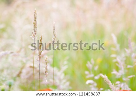 Close up of grass blades on a meadow, summer.