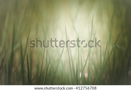 Close up of grass field in the morning , shallow dept of field and soft focus process, natural background - stock photo