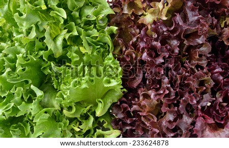 close up of green and red lettuce - stock photo