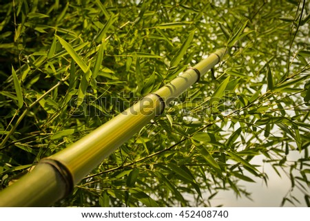 Close up of green bamboo tree in the forest  - stock photo