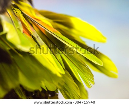 Close up of green colorful feathers.Beautiful feathers texture background. Abstract warm tropical Textured backdrop for card, postcard with blurry effect.Object on one side of picture, partly isolated