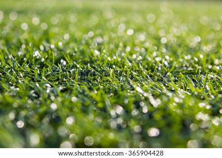 Close-up of  green grass with bokeh background