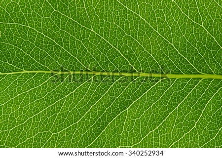 close up of green leaf texture - stock photo