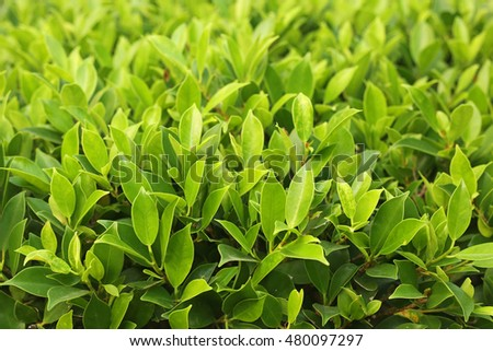 Close up of green leaf texture background