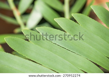 Close up of green leafs in oval shape for nature background