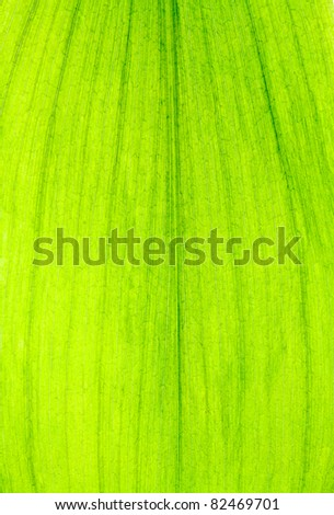 Close up of Green Leave Texture use as a Background - stock photo