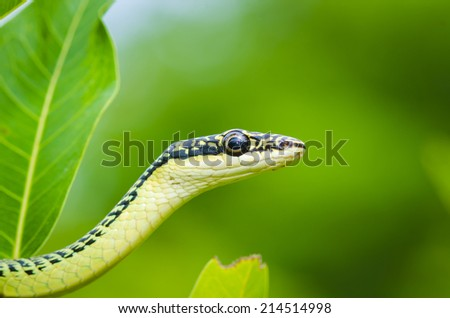 close-up of green mamba snake on tree, tropical forest, Thailand