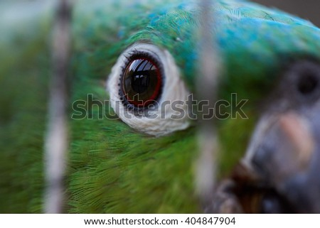 close up of green parrot eye  in cage