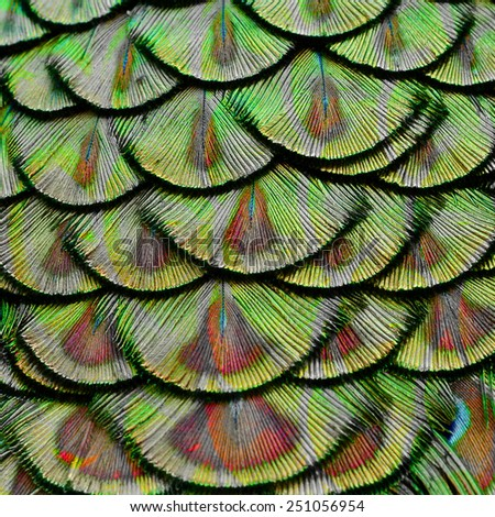 Close up of Green Peacock Feathers in the great background texture with red valet reflection - stock photo